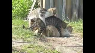 коты ёбаны ебуны
