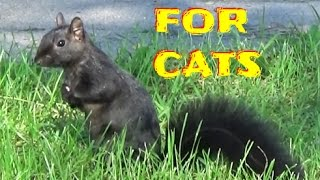 Entertainment for Cats & Dogs ! BIG CITY ( 6 Hours ) Birds, Squirrels, Rabbits, Chipmunks, Pigeons,