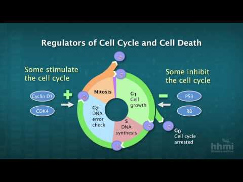 Human papillomavirus vaccine stem cell transplant