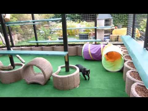 Freigehege für Katzen