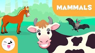 Mammals For Kids - Vertebrate Animals - Natural Science For Kids