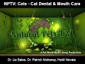 Natural Pets TV: Cat Edition - Episode 2 -  Cat Dental & Mouth Care - Issues, Concerns and Care