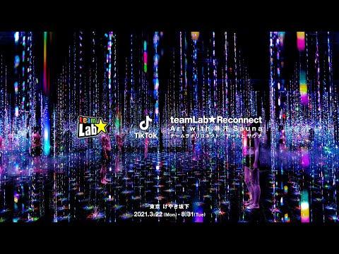 チームラボ & TikTok, チームラボリコネクト:アートとサウナ / teamLab & TikTok, teamLab Reconnect : Art with Rinkan Sauna