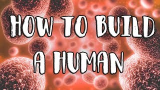 exurb1a - How to Build a Human