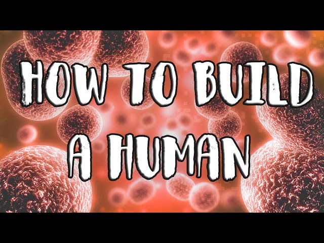 exurb1a how to build a human