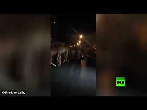 العرب اليوم - شاهد: إجلاء آلاف الجمال من ميناء طرابلس في ليبيا
