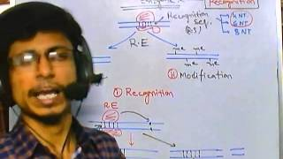 Types Of Restriction Enzyme