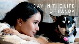 A DAY IN THE LIFE OF PANDA   Heart Evangelista