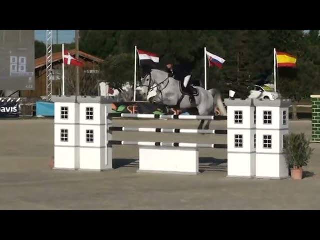 Related to Chelana - 1M60 showjumper