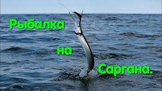 Рыбалка на черном мое сарган