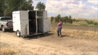 Trailer loading into a two horse trailer
