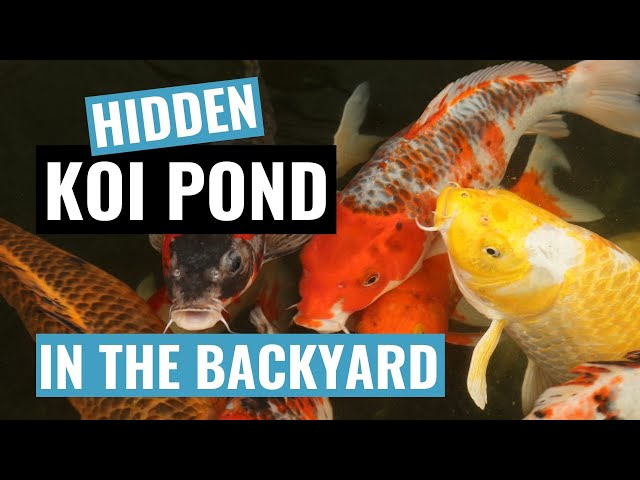 My natural looking Koi fish Pond Water Garden (two weeks old)