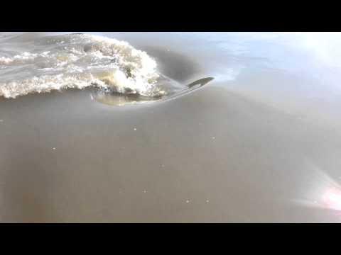 Big fish in Missouri river