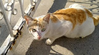 Trying To Gain Trust Of Scared Feral Cat