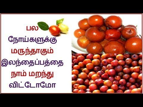 Indian plum Jujube tree with fruits Elanthai palam Video 1