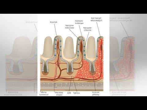 Hosszú távú fogyás szinte lehetetlen