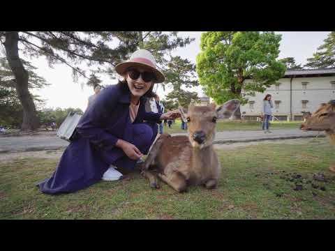 日本旅行紀錄-奈良公園