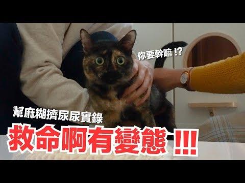 貓咪都要好好照顧