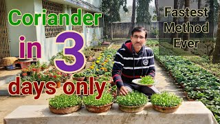 Fastest growing method of Coriander ! No one told you before