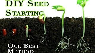 Seed starting 101: DIY indoor method for germinating veggie seeds