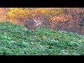Deer Hunting quot best Of quot Special Buck Fever 411b