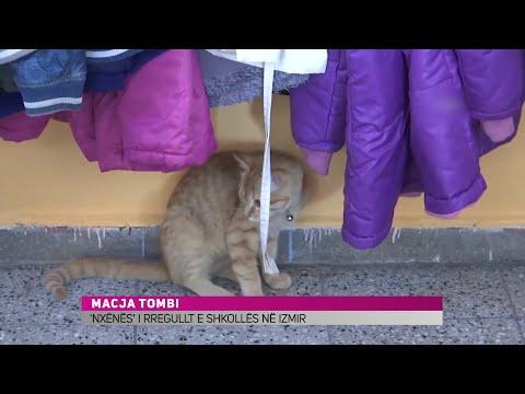 Maçoku 'nxënës' i rregullt në një shkollë në Turqi - KURIOZITET ZICO TV