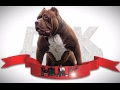 The Most Famous Pit Bull On Earth