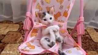 Приколы про котов и кошек до слез видео
