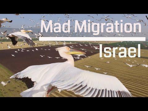 סרטון טבע יפיפה על נדידת ציפורים בשמי ישראל