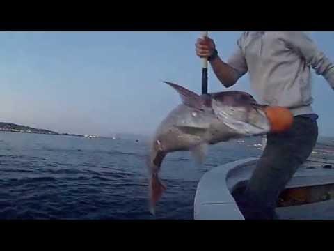 La pesca su una picca di una fotografia a caduta