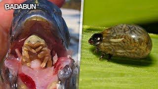16 animales que parecen creados por Satanás