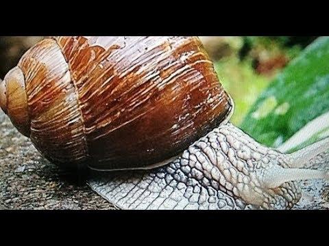 La varicosité lopération les rappels saratov
