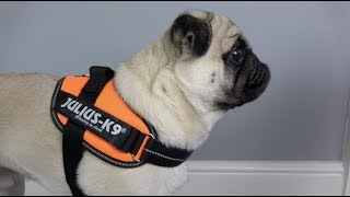 Julius-K9 IDC Powerharness Review! - Better Than The Original?