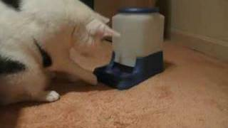 Designed with an over-eating cat in mind, this feeder requires some work for the cat for a few pieces of kibble. This might also be a fun project for treats! Read about how to make it a Instructables.