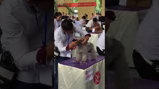 Professional dog grooming clippers for sale Lithium Li-ion battery(8780) youtube video