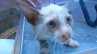 Saving Drowning Kittens - Video Youtube