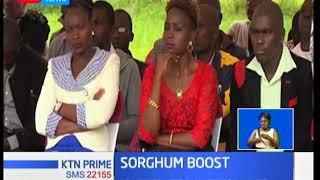 Kenya Breweries urge Busia youth to embrace sorghum farming