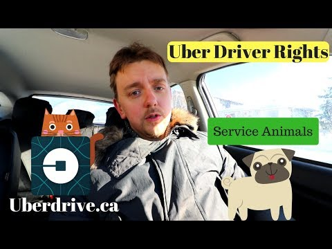 Uber Driver Rights, Dealing With Pets, Service Animals.