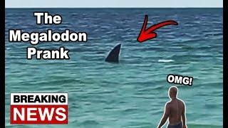 Megalodon Shark Prank In Florida! (Someone Pranked The News?)