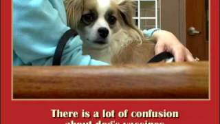 The Complete Healthy Dog Handbook: Healthcare
