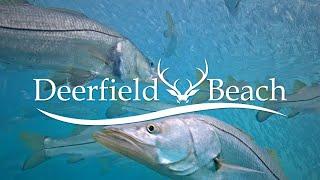LIVE Deerfield Beach – Underwater Camera