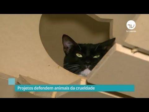 Projetos defendem animais da crueldade - 18/10/19