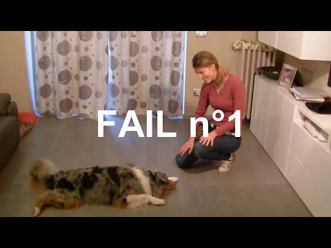 Come insegnare il ROTOLA - Addestramento Educazione cani n° 5 | Qua la Zampa