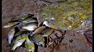 CATCHING 100+ lbs of CATFISH with WORMS & BLUEGILL.