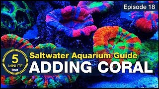 Top LPS and soft corals that make a tank POP! Adding simple beginner corals