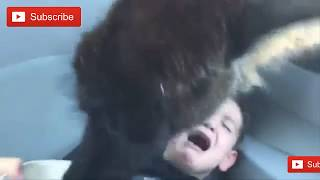Most deadly animal attack on people