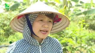 Thái Hưng Khám phá vương quốc dược liệu và công nghệ sản xuất trà thảo dược Thái Hưng