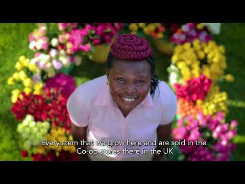Akcijų pasirinkimo dokumentinis filmas