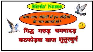 birds name in hindi - 免费在线视频最佳电影电视节目 - Viveos Net
