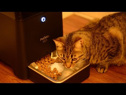 Petnet Beta SmartFeeder Automated Smart Home Pet Feeder – [Review]